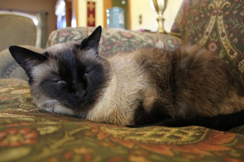 Jan282011_cat_0017