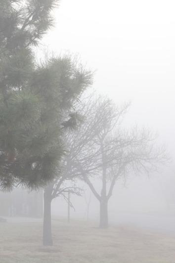 Feb162011_fog_0005