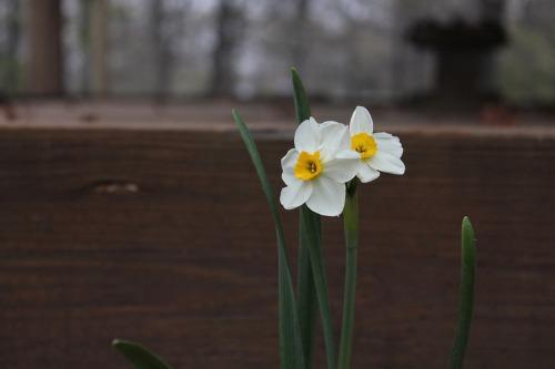 Mar272011_0012
